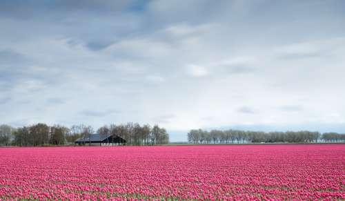 Case Study: ideeën verzamelen voor een mooier Aalsmeer